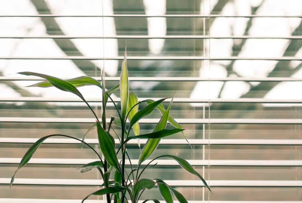 smart devices - motors for blinds